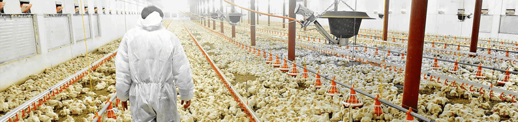 Ozone Poultry