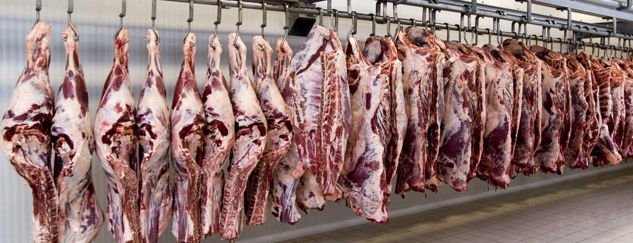 Ozone Beef Industry